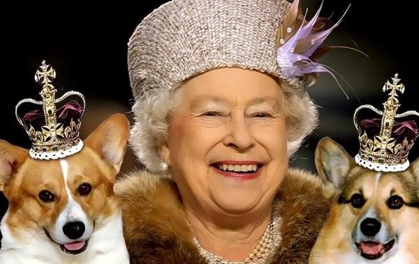 Cachorros de Elizabeth II comem lombo de bezerro feito por um chef
