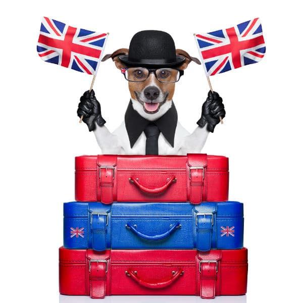 Como viajar com animais de estimação para Londres?