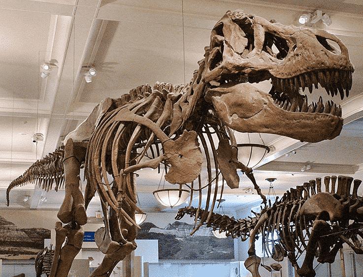 Natural History Museum, porque você deve conhecer?